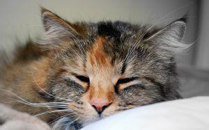 1Sleeping